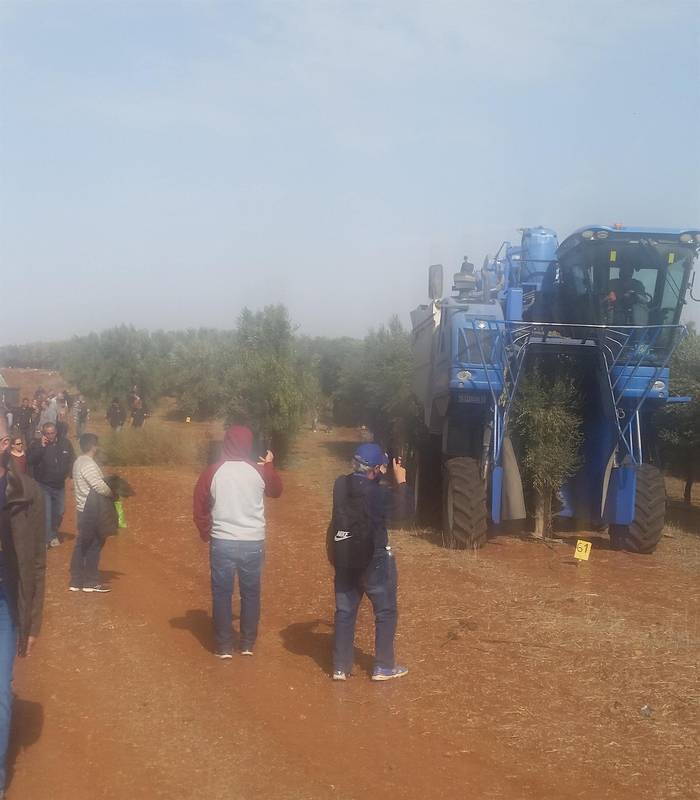Field trip of olive mechanical harvesting and oil presses process , for Mei Eden 26/11/17